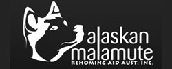 Alaskan Malamute Rehoming