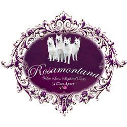 Rosamontana