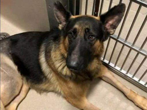 RANGO (Foster to Adopt)